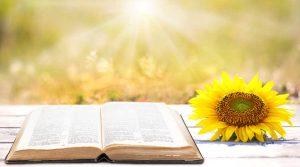 Un fiore in un libro